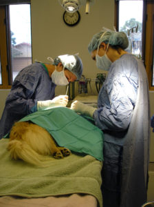 pet surgery services